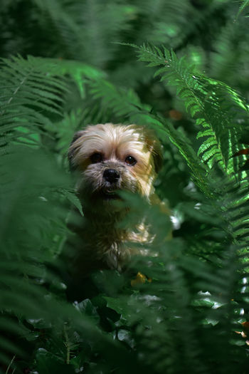 Little dog in the fern