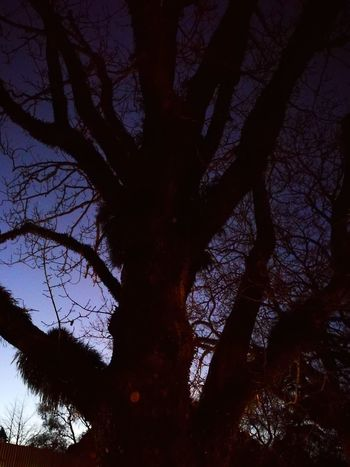 Branch Tree Trunk Outdoors Darkness Dusk