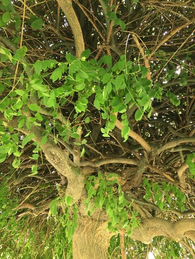 Green Color Plant Nature Tree Leaf Beauty In Nature
