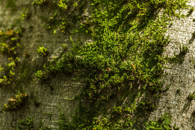 Beauty In Nature Close-up Day Growth Moss Nature No People Outdoors Plant