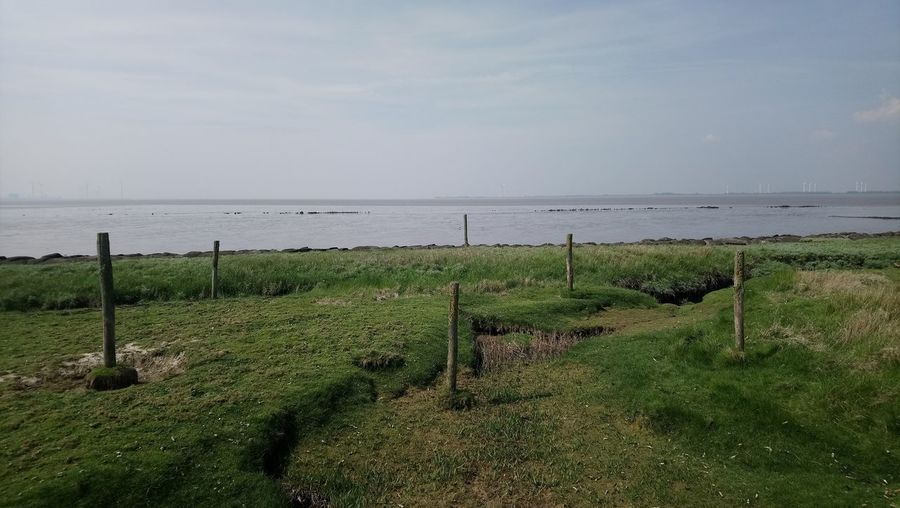 6 poles. Nature Water Sea Beach Agriculture Sky Horizon Over Water Grass Landscape Wooden Post