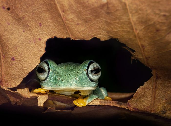 Tree frog on the forest