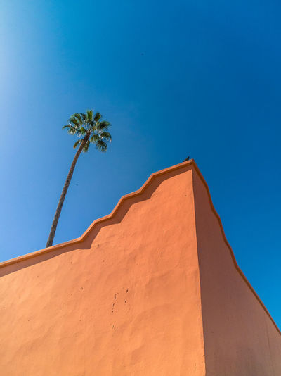 Pigeon & Palm Pigeon Palm Tree Wall Blue Marrakesh Morocco Tropical Blue Sky Pink Wall Sky Nature Tropical Climate Tree Plant Architecture Sunlight Day Building Exterior Wall - Building Feature Outdoors Arid Climate No People