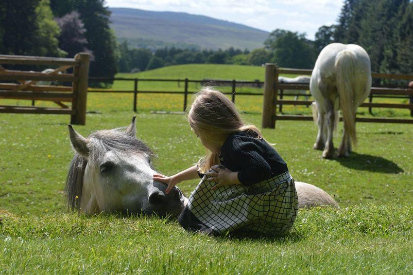 Animal Themes Childhood Domestic Animals Farm Horse Outdoors Pets Rural Scene