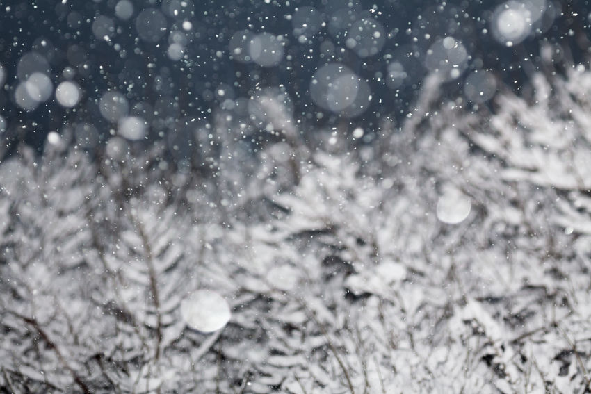Snow Falling from Night Sky Air Backgrounds Blue Christmas Cold Falling Frost Ice Nature Nature Photography Night Scene Season  Sky Snow Snow Covered Snow ❄ Snowfall Snowflake Snowing White Winter Wintertime Xmas