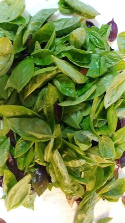 Future pesto Basil LG V30 Garden Bounty Gone Green Twisted Tuesday Garden Harvest Leaf Vegetarian Food Agriculture Raw Food Close-up Green Color Food And Drink