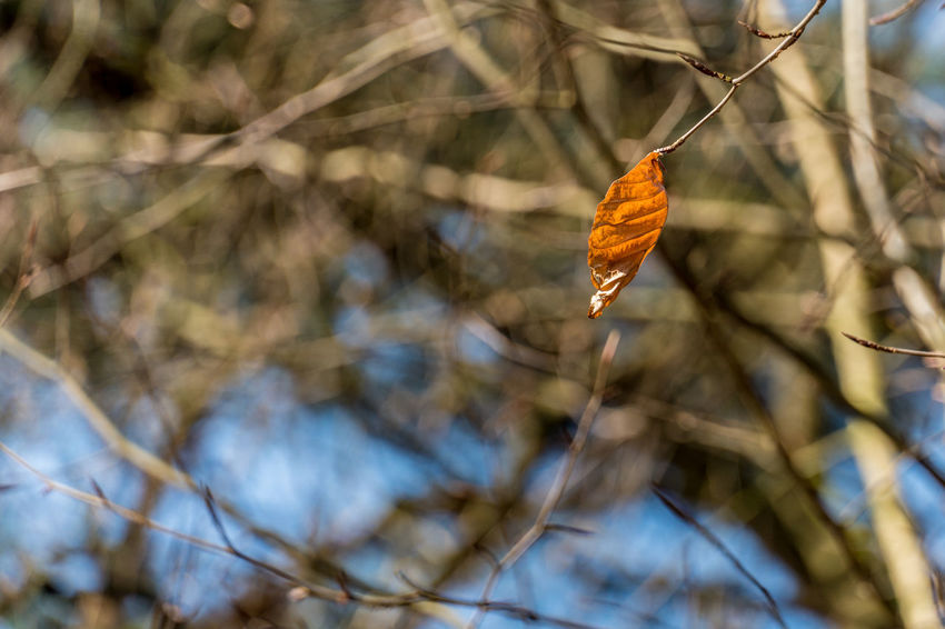 Leaf 🍂 Animal Themes Animals In The Wild Beauty In Nature Branch Close-up Day Focus On Foreground Growth Nature No People Outdoors Tree