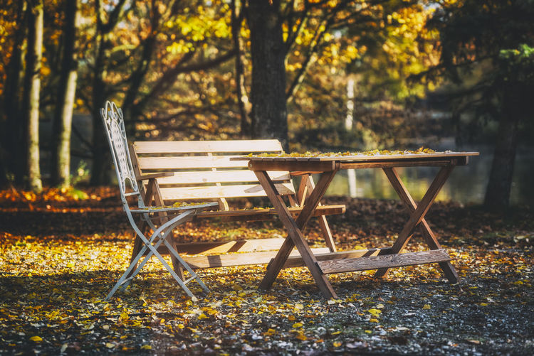 Empty chairs and table against trees during autumn