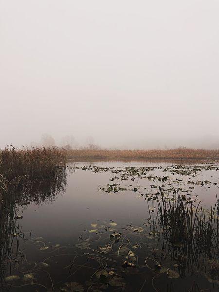 Morning lake Lake Polska Poland Fog Moring Fog Nature Warmia Olsztyn Mazury Landscape Warmia-Masuria Bird Water Lake Sky Animal Themes Foggy Scenics Calm Remote Rocky Mountains Shore Horizon Over Water Countryside Tranquility Idyllic Non-urban Scene EyeEmNewHere