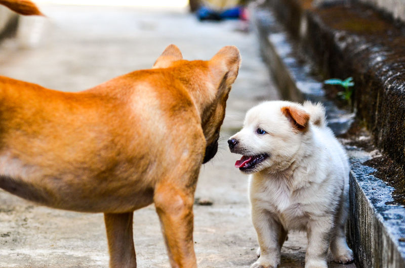 Puppy with dog