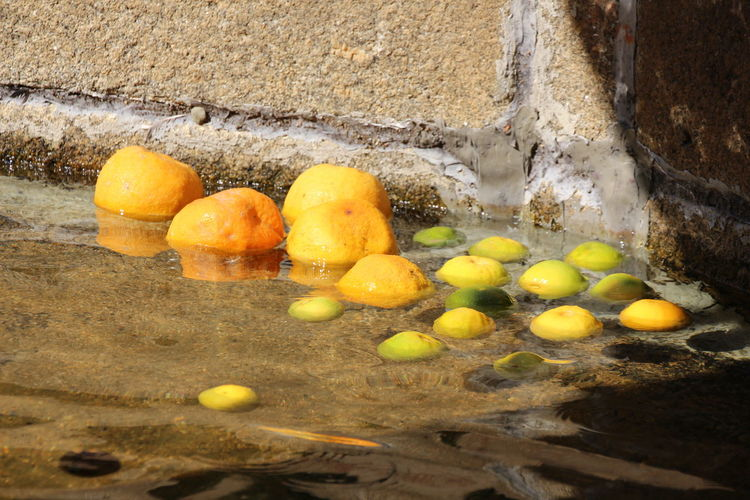 Lemons and oranges floating on water by wall