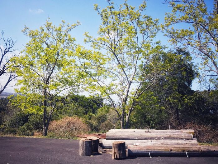 Great view of beautiful sunny day. GREAT VIEW, LIVING LIFE ,GREAT OUTDOORS, Tree Wood - Material Day No People Outdoors Growth Nature Branch Sky Beauty In Nature