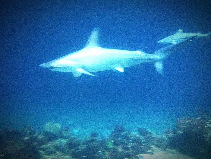 Sharks Sharks Blue Water No People Low Angle View Sea Nature Sky My Best Photo