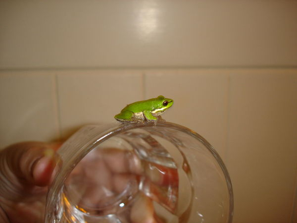 Animal Themes Animal Wildlife Close-up Green Color Holding Human Hand Indoors  On Glass One Animal One Person Tree