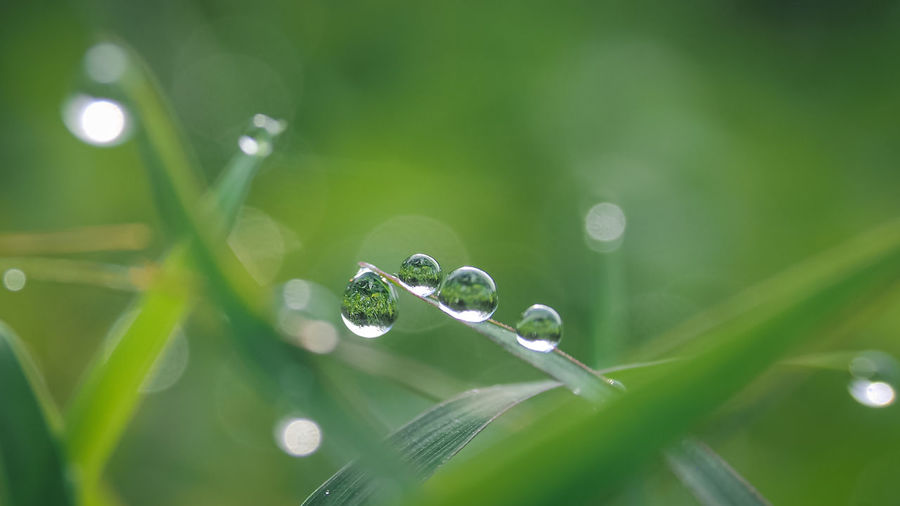 Close-up of water drops on plant
