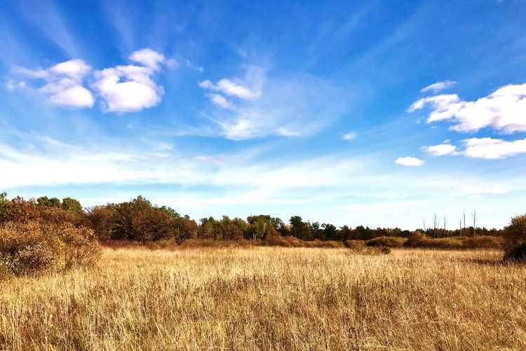 Nature Reserve Prairie Sky And Clouds Landscape Autumn Colors Tranquility No People Beauty In Nature Outdoors Grass