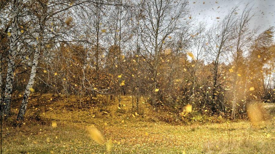 Листопад Nature Autumn Colors Autumn осень Outdoors Landscape Trees