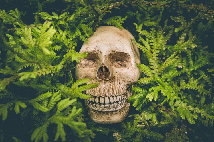 Human skull and green leaf are life concept backgrounds.
