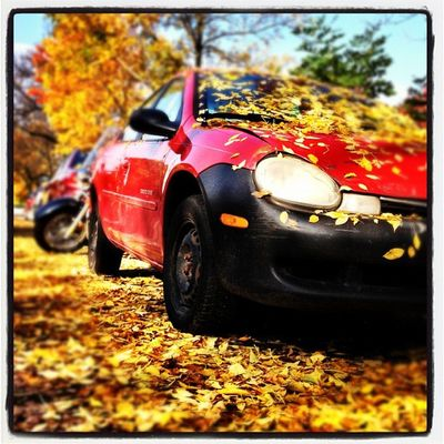 Prime Parking Spot. #btv #vt #foliage Parking 802 Foliage Igharjit Iphoneonly Vermontbyvermonters Photooftheday Vt_scene Picoftheday Vermont_scene Burlington Igvermont Vermont Igvt Vermont_foliage Fallinvt All_shots Instamood Vt_foliage Bestoftheday Yellow_leaves Instagood Webstagram Vt Car Btv