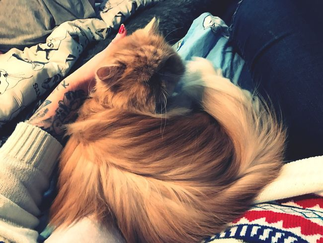 Relaxation Animal Themes Indoors  Pets Cat Cat♡ Transylvania💕 Cuddles