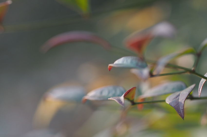 Autumn Colors Leaf Leafs Leaf 🍂 Autumn Leafs Leafes Leaf Fantasy