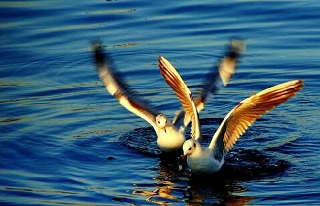 Flying Blue Sea Birds Turna çanakkale Tutku Sunlight Follow Smile ✌