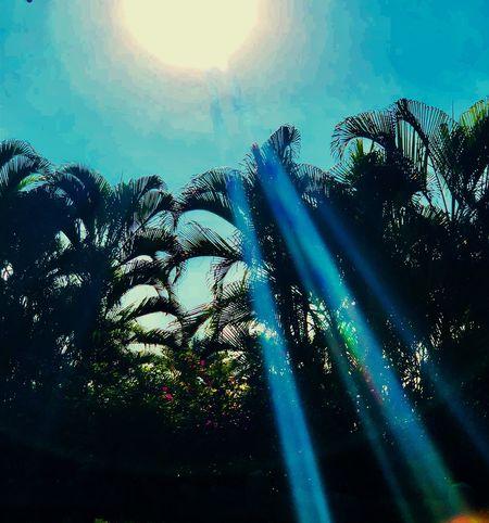 Palm Tree Sunbeam Sun Low Angle View Lens Flare Sunlight Tree