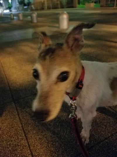 My dog(^^) First Eyeem Photo