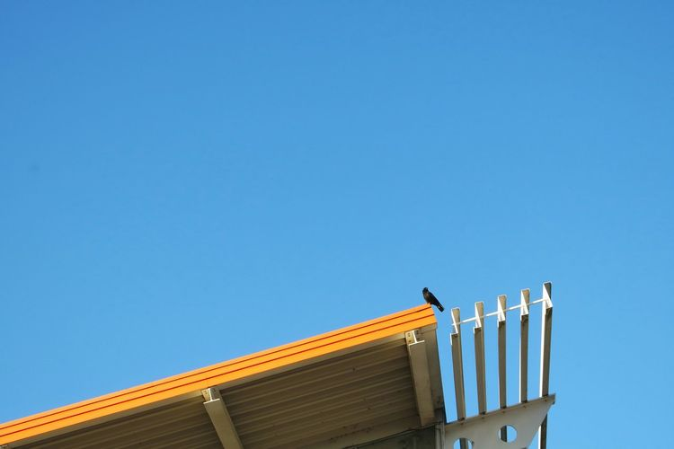 Low Angle View Of Crow Perching On Roof Against Clear Blue Sky