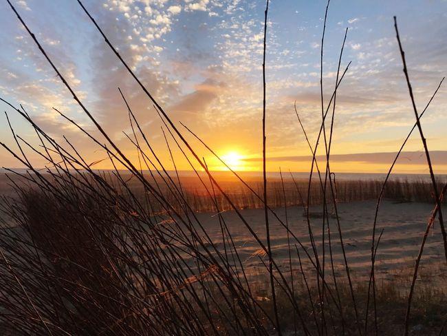 Beach Sunset Beauty In Nature Beach Tranquility Travel Destinations Sky Grass