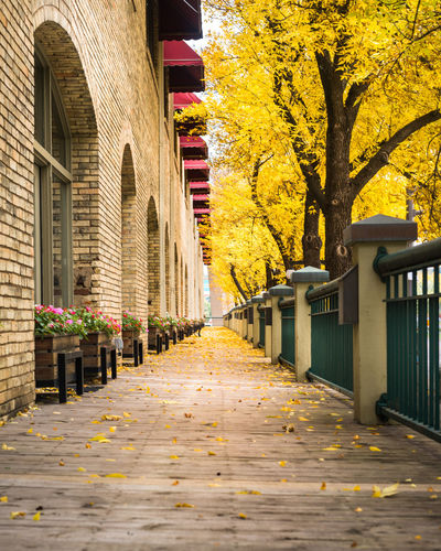 City Boardwalk in the Autumn City Boardwalk Wood Footpath Stroll Autumn Fall Changing Leaves Season  Architecture Built Structure Building Exterior Tree Building Nature No People Outdoors Sidewalk Leaves Path Trail Walkway MidWest Minneapolis Urban