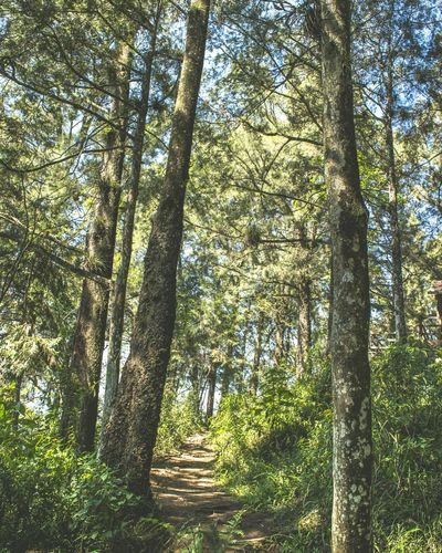 Hike. Tree Nature No People Green Color Low Angle View Beauty In Nature Nature Mountains Travel Mexico Outdoors Adventure Orizaba Landscape, Morning Landscape Tranquility Colors Beauty In Nature Landscape_photography Roadtrip Hike
