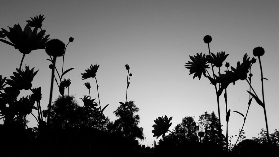 EyeEmNewHere First Eyeem Photo EyeEm Nature Lover Flower Head High Angle View Silouette & Sky Sunset Silhouettes Colorful Uncultivated Evening Blackandwhite Smartphonephotography Outdoors Light And Shadow Shadows And Backlighting Tree Palm Tree Flower Bird Silhouette Sky Plant Plant Part Tree Trunk Plant Bark Branch Bare Tree Treetop Flowering Plant My Best Photo