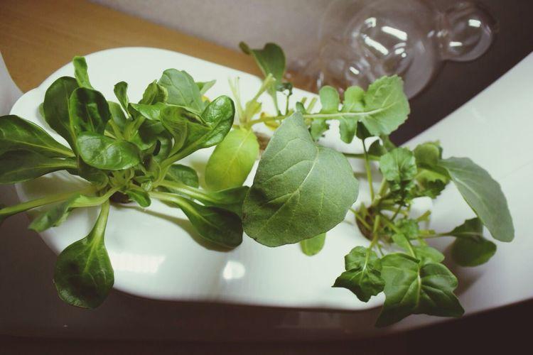 Vegeuni Green Rucola