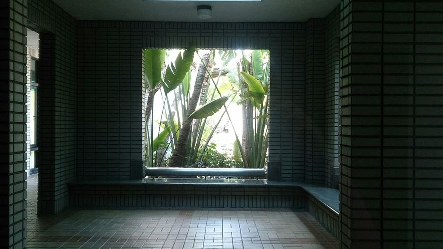 Curtain Tree Home Interior Window Architecture Bamboo - Plant Plant Life Growing Leaf Vein Young Plant