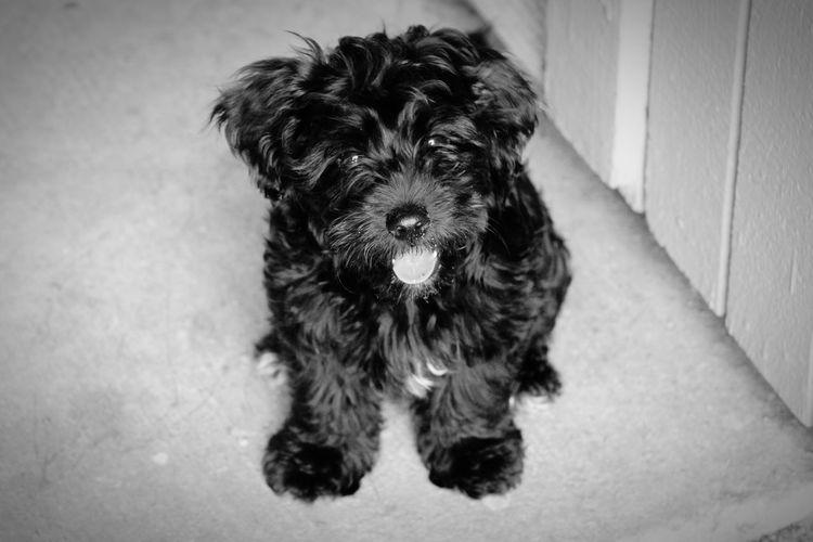 Puppy Love Cute