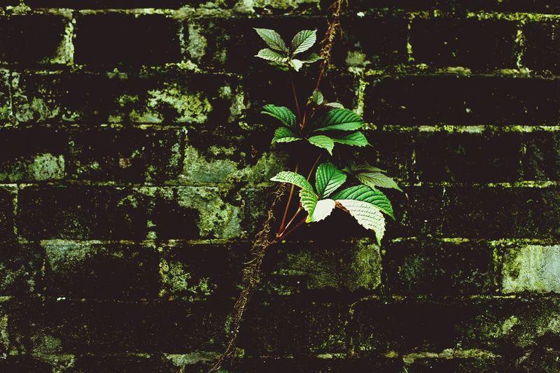 千年城墙下的植物