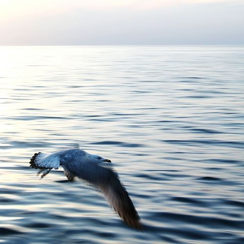 Gabbiano Movement Sea Water The Great Outdoors With Adobe Sky And Sea Landscape Wave Horizon Trieste Photography In Motion Movement Photography Movement Of Water Seagull Bird Uccello Volare Tramonto Moloaudace Sunset The Great Outdoors - 2016 EyeEm Awards