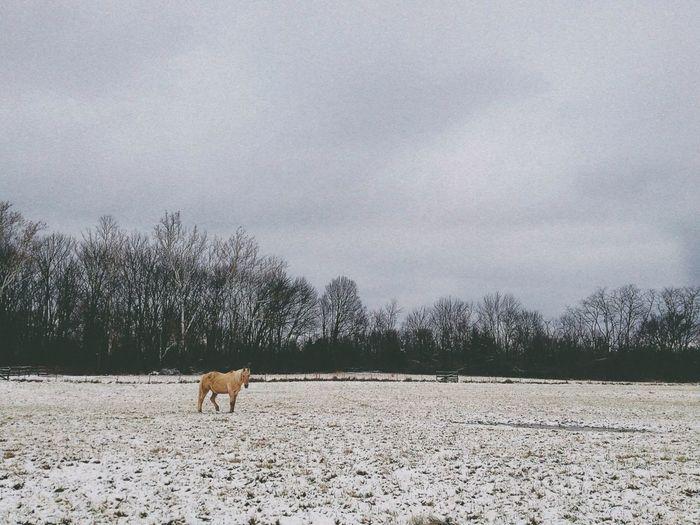 Finally, some snow #vscocam