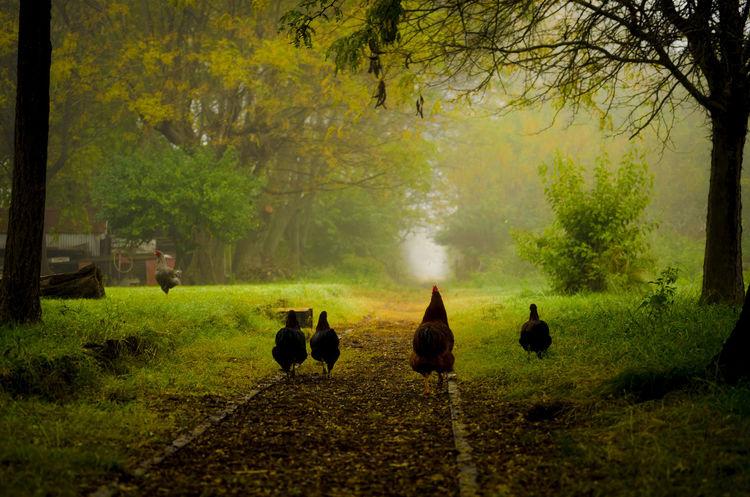 """""""Buscando nuestro destino"""" En un pequeño pueblito de la Provincia de Buenos Aires en una mañana que había neblina. Campo Green Color Gallinas Neblina Paisaje Tren Vía"""
