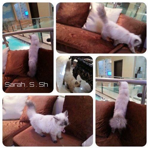 اروع احساس تشوف قطتگ مبسوطه ومستانسة ...... وزين نوسي ♡♡