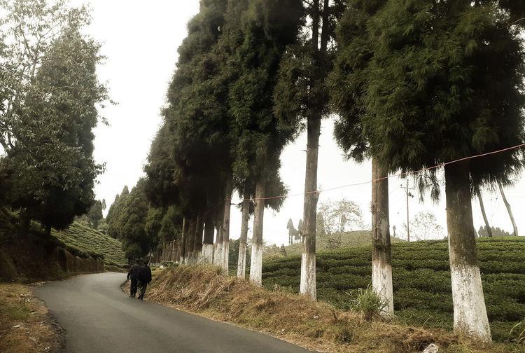 Man walking on road by trees against sky