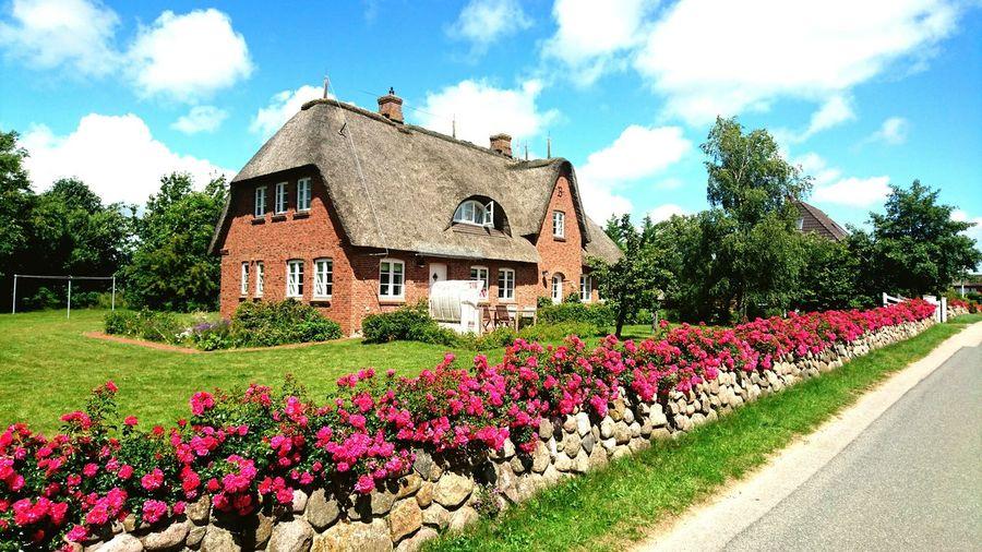 Summer Nordsee Cottage Blue Sky Flowers Grass