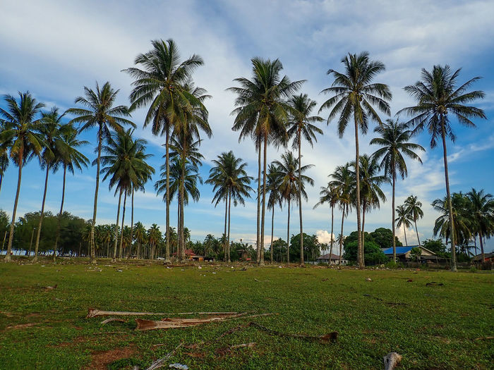 Palm trees on field against sky