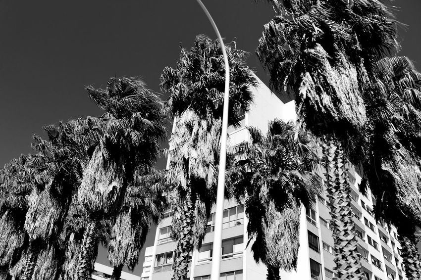 Architecture Beautifully Organized Black And White Blackandwhite Bnw Building Building Exterior Buildings Built Structure Exceptional Photographs EyeEm Best Shots EyeEm Best Shots - Black + White EyeEmBestPics From My Car From My Point Of View Growth In A Row Low Angle View Outdoors Palm Tree Palm Trees Perspective Sky The Drive Trees