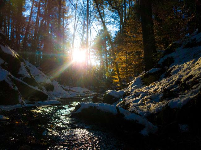 Lens Flare Sunbeam Sunlight Scenics Beauty In Nature Water Outdoors Nature EyeEmNewHere