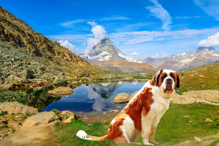 Dog in mountains against sky