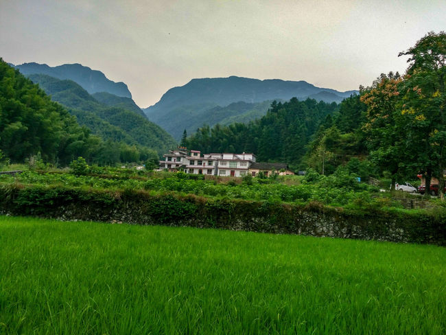 远山有故事 Tree Rice Paddy Mountain Water Rice - Cereal Plant Sky Architecture Landscape Building Exterior Built Structure