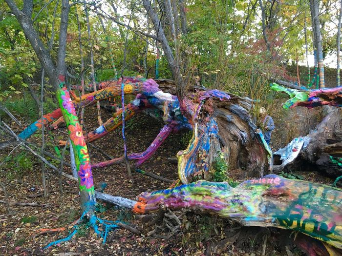Visited the Hippie Tree while hiking in Traverse City, MI Hiking Eye Em Nature Lover Art Graffiti Traverse City Michigan Hippie Tree