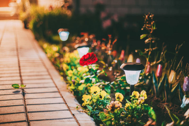 Close-up of potted plants on footpath